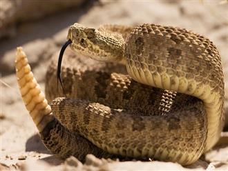 Rắn sợ mùi gì và cần lưu ý gì khi gặp rắn?