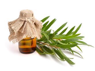 Tinh dầu tràm trà có tác dụng gì?
