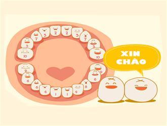 Thứ tự mọc răng của trẻ và cách chăm sóc chuẩn nhất