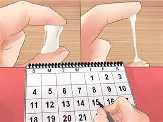 Cách tính ngày rụng trứng để vợ chồng dễ thụ thai