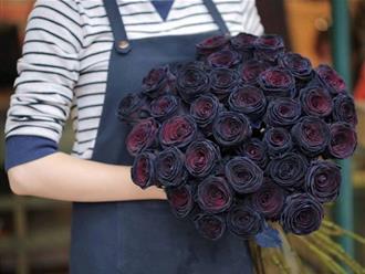Hoa hồng đen có ý nghĩa gì mà lại bí ẩn và quý hiếm đến thế