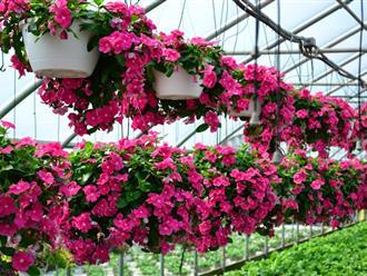 Tổng hợp các loại hoa dễ trồng quanh năm nở rực rỡ rất được ưa chuộng