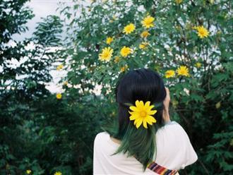 Sự tích về loài hoa dã quỳ với tình yêu thủy chung đôi lứa