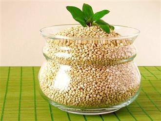 Hạt diêm mạch với những giá trị vàng nằm trong nguồn dinh dưỡng