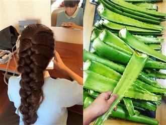 'Học lỏm' vợ Lý Hải lấy thịt nha đam chà lên tóc 10 phút, kết quả bất ngờ khiến hội con gái ầm ầm làm theo