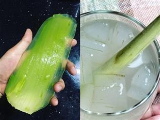 Không phải đắp mặt nạ, cứ lấy nhánh nha đam nấu nước để uống vừa ngon giòn sần sật lại thanh lọc cơ thể da khỏe đẹp nói không với mụn