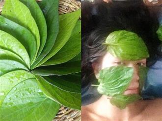 Nám tàn nhang sâu đến đâu cũng hết sạch, trẻ hơn 10 tuổi chỉ nhờ loại lá này mà không cần uống collagen