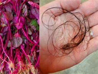 Nỗi lo tóc rụng mãi không ngừng được trị triệt để chỉ với rau dền đỏ