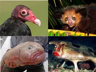 Khiếp đảm với những loài động vật xấu xí nhất quả đất: Từ ếch 'địa ngục' đến khỉ 'phù thủy' và chuột 'bất tử'