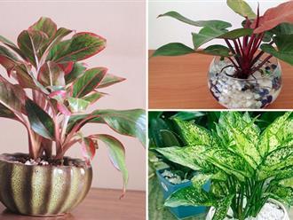 Sốt với 5 loại cây trồng trong nhà giúp gia chủ hút tài lộc, tiền bạc vào nhà nước Sống Đà