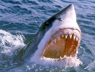 Phát hiện gây SỐC về loài cá mập epaulette: Đang tiến hóa để đi bộ trên cạn và bắt con mồi ở vùng nước nông