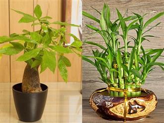 Điểm danh những loại cây đem may mắn, tài lộc vào nhà
