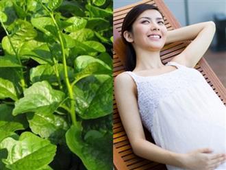 Bà bầu mang thai 3 tháng đầu có nên ăn rau mồng tơi?