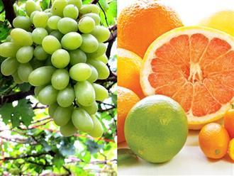 Bà bầu nên ăn quả gì trong 3 tháng đầu?