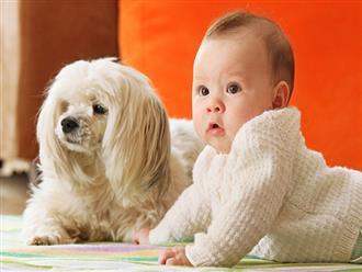 Nuôi chó mèo trong nhà có trẻ sơ sinh, cha mẹ cần đặc biệt chú ý những điều này