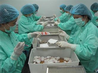 Kết quả thử nghiệm vắc xin Covid-19 trên chuột của Việt Nam sau 10 ngày ra sao?