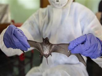 Nghiên cứu mới khẳng định virus SARS-CoV-2 bắt nguồn từ loài dơi
