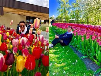 Sau khi lạc vào rừng hoa Tulip, Đàm Vĩnh Hưng quyết tuyển bằng được người yêu