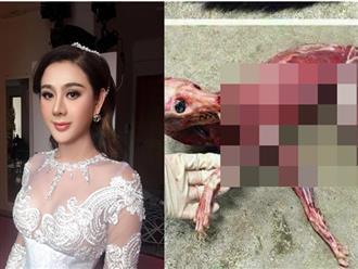 Lâm Khánh Chi đau xé lòng khi xem clip chú cáo nhỏ bị lột da sống để làm áo cho người
