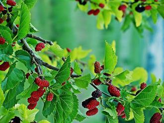 Chuyên gia phong thủy chỉ ra 4 loại cây khắc tinh của may mắn, đặc biệt là cây thứ 3, rất quen thuộc nhưng trồng phải nghèo khổ suốt đời