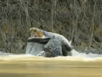 Báo hoa mai mon men phục kích trên bờ rồi bất ngờ nhảy xuống nước 'ĐOẠT MẠNG' cá sấu khiến ai cũng phải ngỡ ngàng