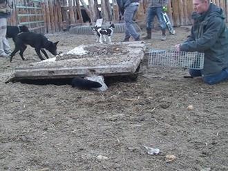 Thấy những lổ nhỏ bất thường trên nông trại, người chủ dùng chó và chồn truy tìm dấu vết thì có phát hiện lớn