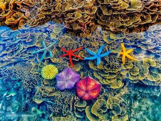 'Đứng ngồi không yên' mùa dịch: Nao lòng ngắm 'vạn vật dưới lòng nước' đẹp lung linh, huyền diệu từ bãi biển Phú Yên