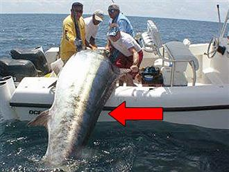 Ba người đàn ông dùng hết sức lực vật lộn với chiếc cần câu cong vút, khi tận mắt chứng kiến chiến lợi phẩm ai cũng 'mắt tròn mắt dẹt' với kích thước con cá