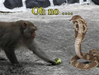 KHÔN NHƯ KHỈ mà vẫn có lúc 'thần hồn nát thần tính' trước những con rắn giả, người xem CƯỜI không NHẶT ĐƯỢC MỒM