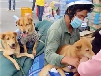 Vụ tiêu hủy 15 con chó vì chủ mắc Covid-19, chuyên gia nhận định: 'Chỉ cần tắm rửa, cách ly... tiêu hủy là không cần thiết'