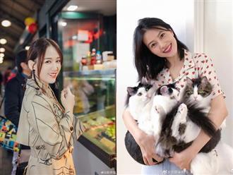 """14 mỹ nhân Hoa ngữ ngoài 40 tuổi: Bên cạnh nhan sắc """"hack tuổi"""" còn gây trầm trồ với style và makeup xuất sắc"""