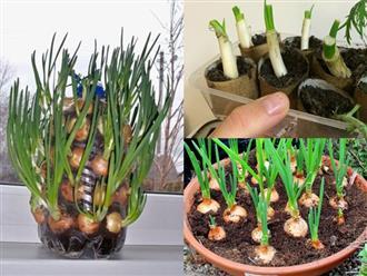 4 cách trồng hành lá tại nhà bằng chai nhựa, lõi giấy cực đơn giản, ăn cả năm không hết