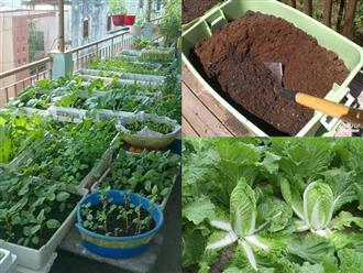 Cách trồng cải thảo trong thùng xốp cực đơn giản tại nhà, cây lớn nhanh như thổi