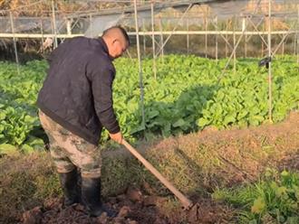 Đang cuốc đất làm vườn, người đàn ông bất ngờ chạm phải thứ kỳ lạ, cúi xuống nhìn kỹ mới phát hiện điều đáng kinh ngạc