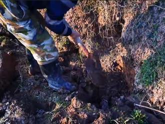 Ruộng khô cằn lâu ngày chẳng ai đụng, người đàn ông mang xẻng ra đào thì vớ bở khi phát hiện ra thứ này