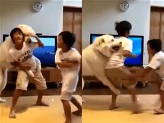 """Hai anh em háu chiến đánh nhau, chú chó cuống quýt can ngăn, nhưng dân mạng lại soi ra sự thiên vị trắng trợn của """"bảo mẫu"""" 4 chân này!"""