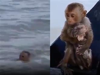 Khỉ con chật vật bơi giữa dòng lũ, hình ảnh sau đó khiến ai nấy đều rơi nước mắt