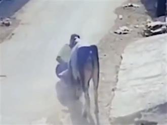 Kinh hoàng cảnh người đàn ông đang đi trên phố bất ngờ bị bò điên lao vào tấn công
