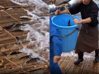 Mãn nhãn cảnh cả làng dùng bẫy tre để bắt cá khủng, người nào người nấy khiêng cả thùng về nhà