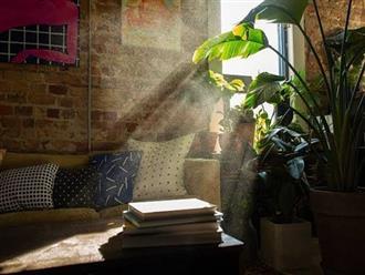 Ô nhiễm không khí trong nhà – thủ phạm giấu mặt gây hại cho sức khoẻ