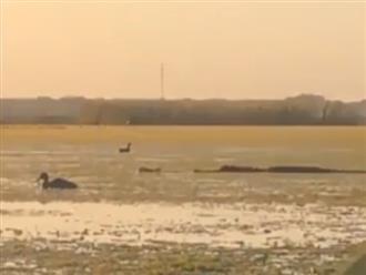 'Sát thủ đầm lầy' tấn công vịt trên hồ chớp nhoáng khiến nhiều người kinh hãi