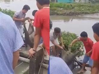 Sau cơn mưa lớn, người dân miền Tây hợp lực bắt cá sấu xổng chuồng