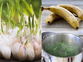 Sự thật về 6 thực phẩm ai cũng tưởng hỏng vứt đi nhưng hóa ra tốt gấp nghìn lần