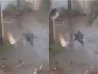 Trong cơn mưa bão, người dân hoảng hồn khi cá sấu dài hơn 3 mét bơi vào sân nhà