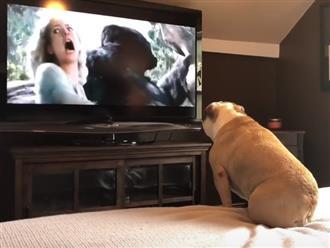 Xem phim thấy nữ chính bị tinh tinh bắt cóc, chú chó có phản ứng bất ngờ khiến dân mạng cười lăn cười bò
