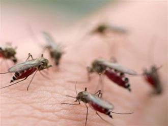 50 người tử vong vì sốt xuất huyết, nguy cơ bùng phát thành dịch lớn
