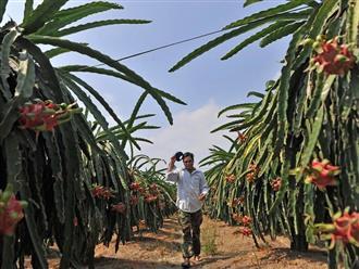 Trung Quốc phát hiện virus SARS-CoV-2 trên bao bì bọc quả thanh long và thùng đựng nhập khẩu từ Việt Nam