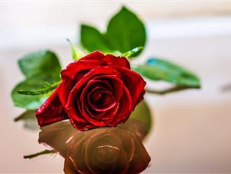 Hướng dẫn chọn quà tặng cho mẹ ngày 8/3 ý nghĩa nhất
