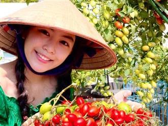 Camera thường cũng không 'dìm' được ái nữ nhà Quyền Linh, đi hái cà chua mà thu về 'cả rổ' like vì nhan sắc quá đỗi ngọt ngào