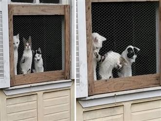 Thấy cô chủ chơi bóng, 3 chú mèo ngoái cổ nhìn với ánh mắt thèm nhỏ dãi khiến dân tình cười nghiêng ngả